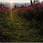 Fichtelberg - Blick ins Tal