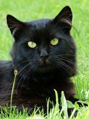Fidel....diese Augen wie Smaragde.