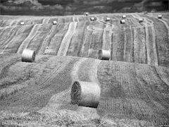 Field stories 2