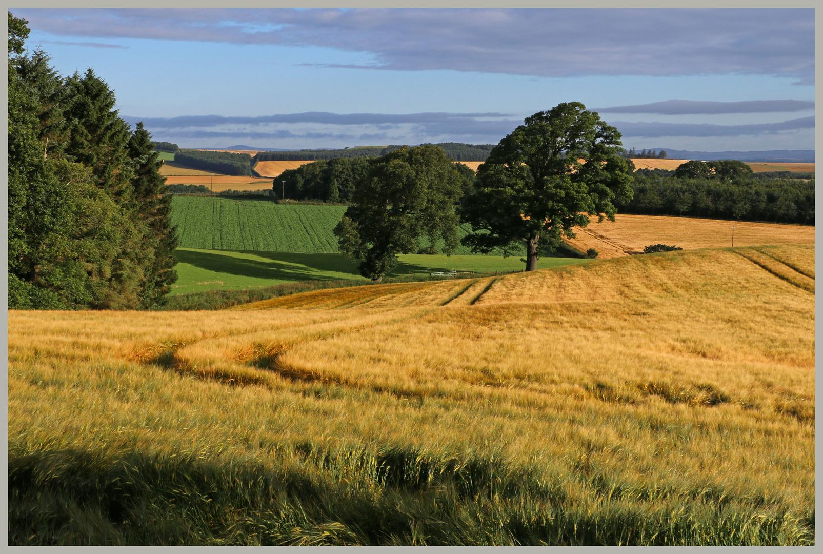 fields near Pawston Northumberland 1b