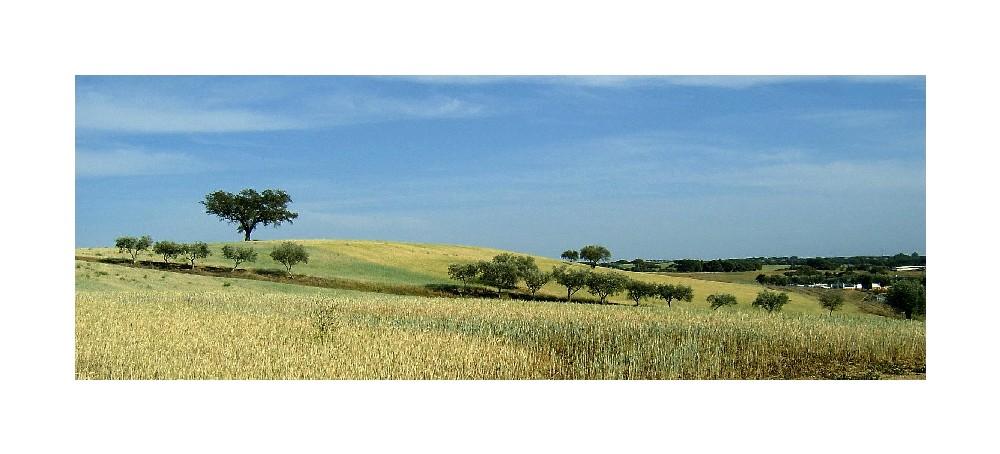 Fields od gold