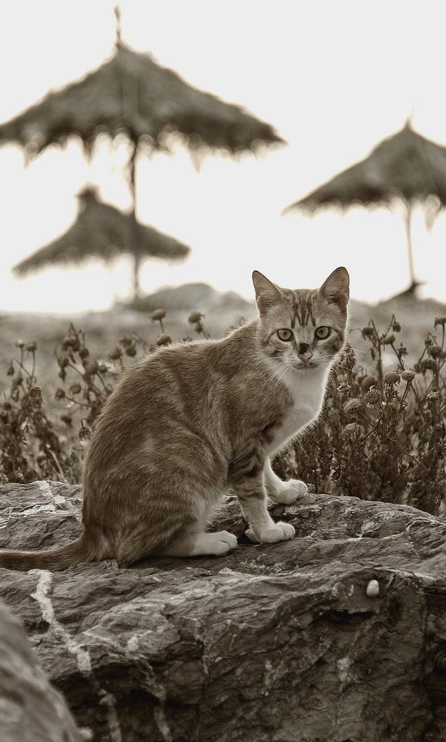 Fightcat