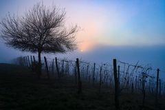 filari di nebbia
