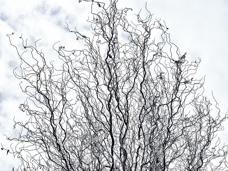 Filigrane Baumwelten ...