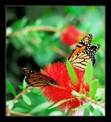 Filigrane Schönheiten 6