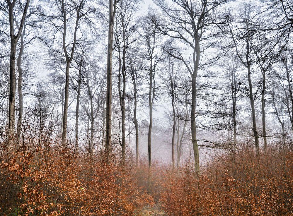 filigraner Buchenwald im Winter