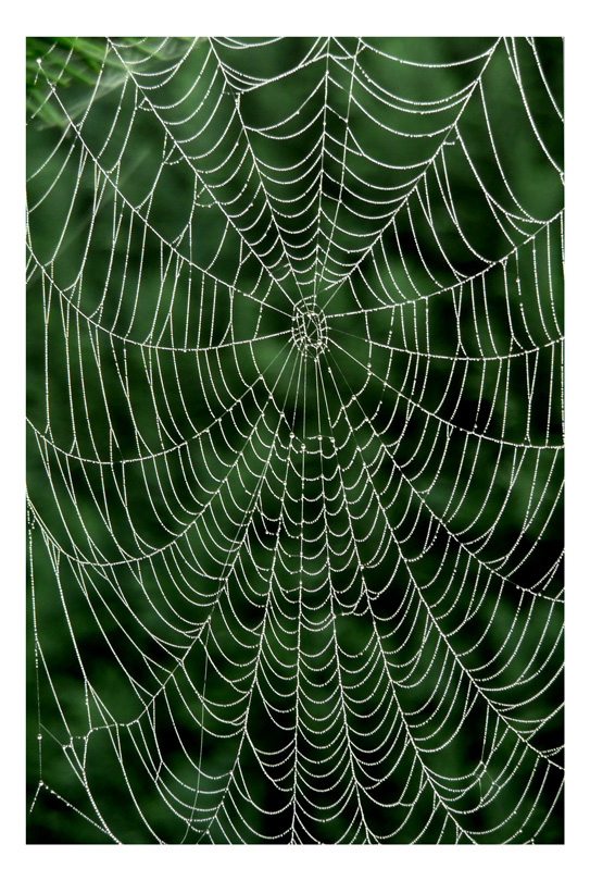Filigranes Kunstwerk der Natur (1)