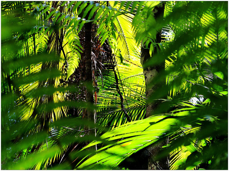 filigranes rauschen im urwald foto  bild  world spezial