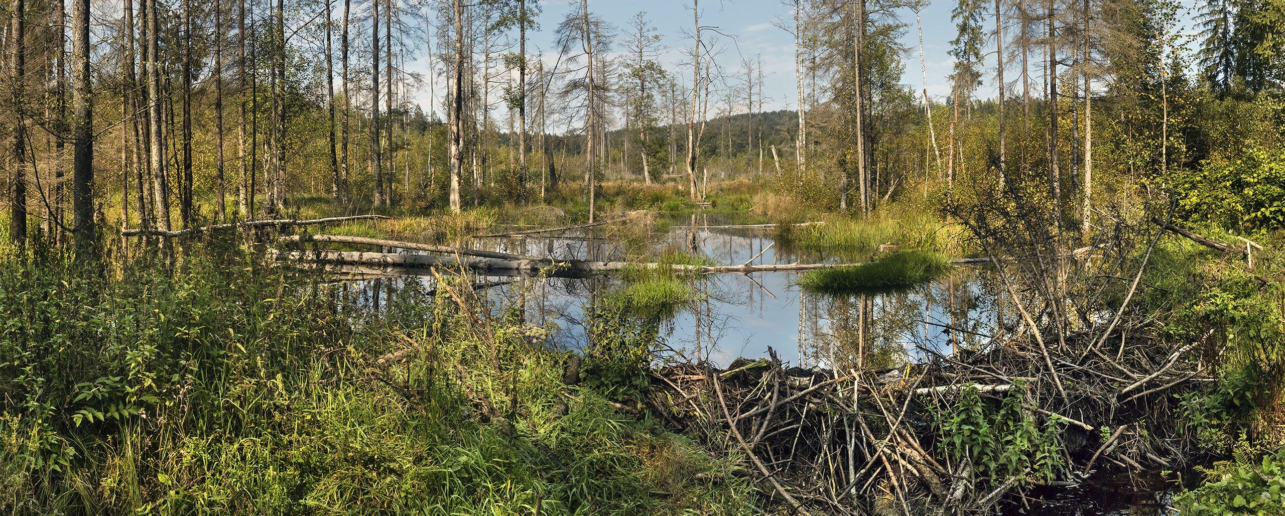 FILZWALD - Nationalpark Bayerischer Wald