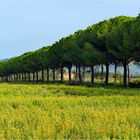 fin d été en campagne toscane