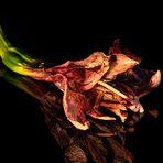 Fin de vie de l'amaryllis .