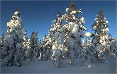 Fin-Winter