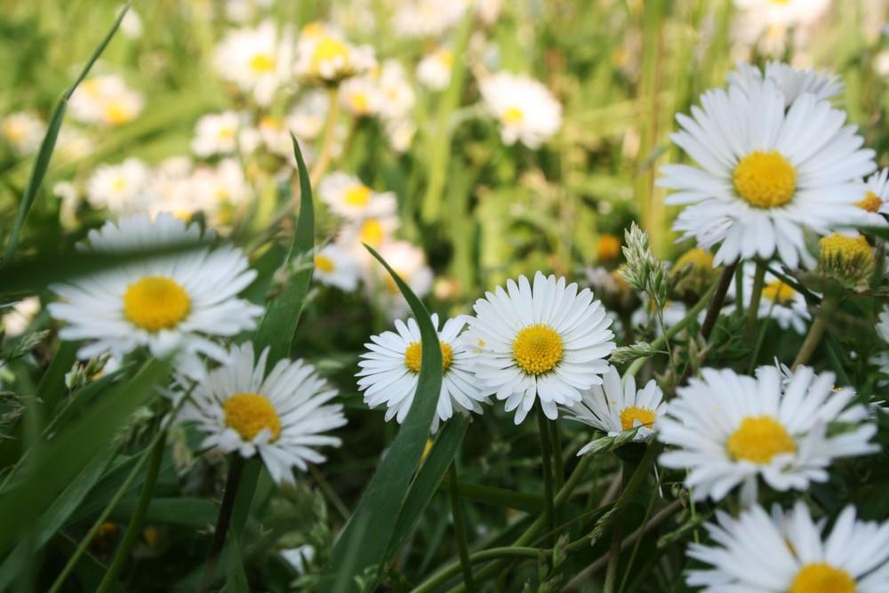 Finalmente Primavera!!