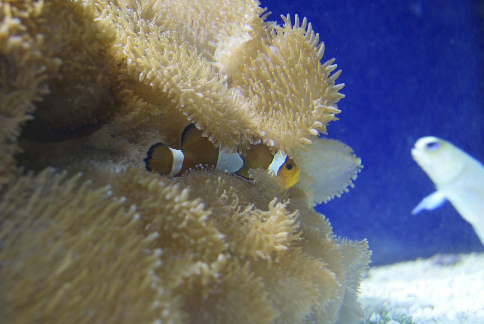 Findet Nemo....