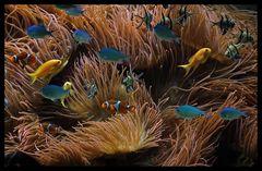 """"""" Findet Nemo ! """""""