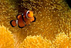Findet Nemo!