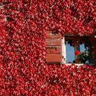 Finestra sul rosso