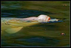 Fingerübung :: essende Fische 1/3