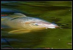 Fingerübung :: essende Fische 2/3