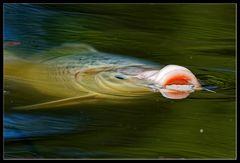 Fingerübung :: essende Fische 3/3