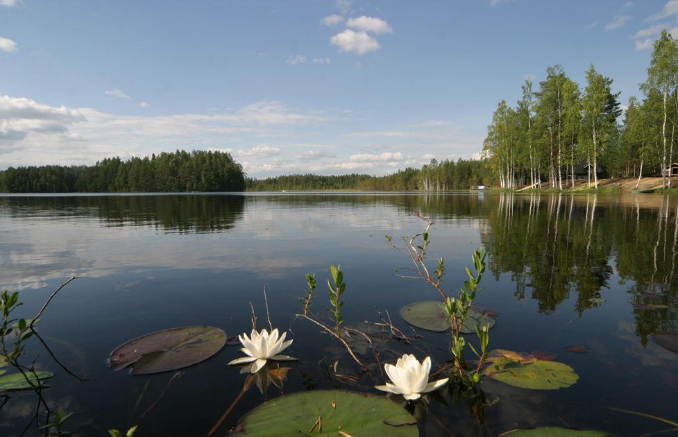 Finnischer See aus der Froschperspektive