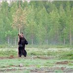 Finnland Bärenland [50]