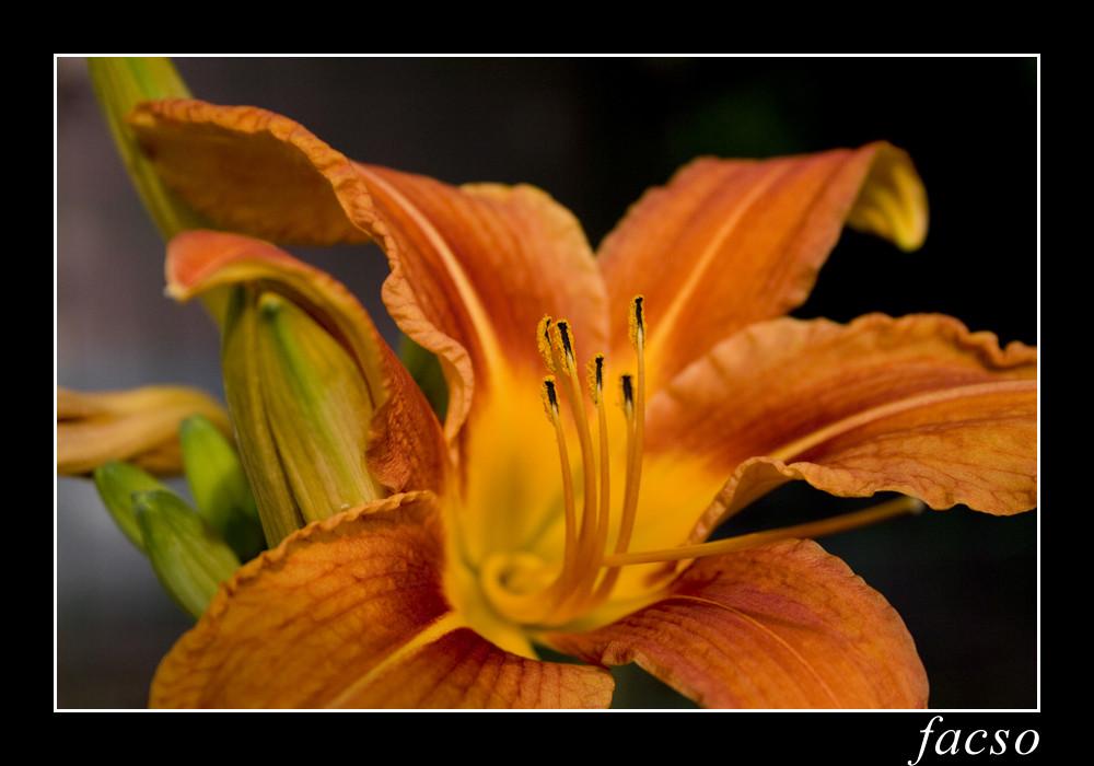 Fiore #1