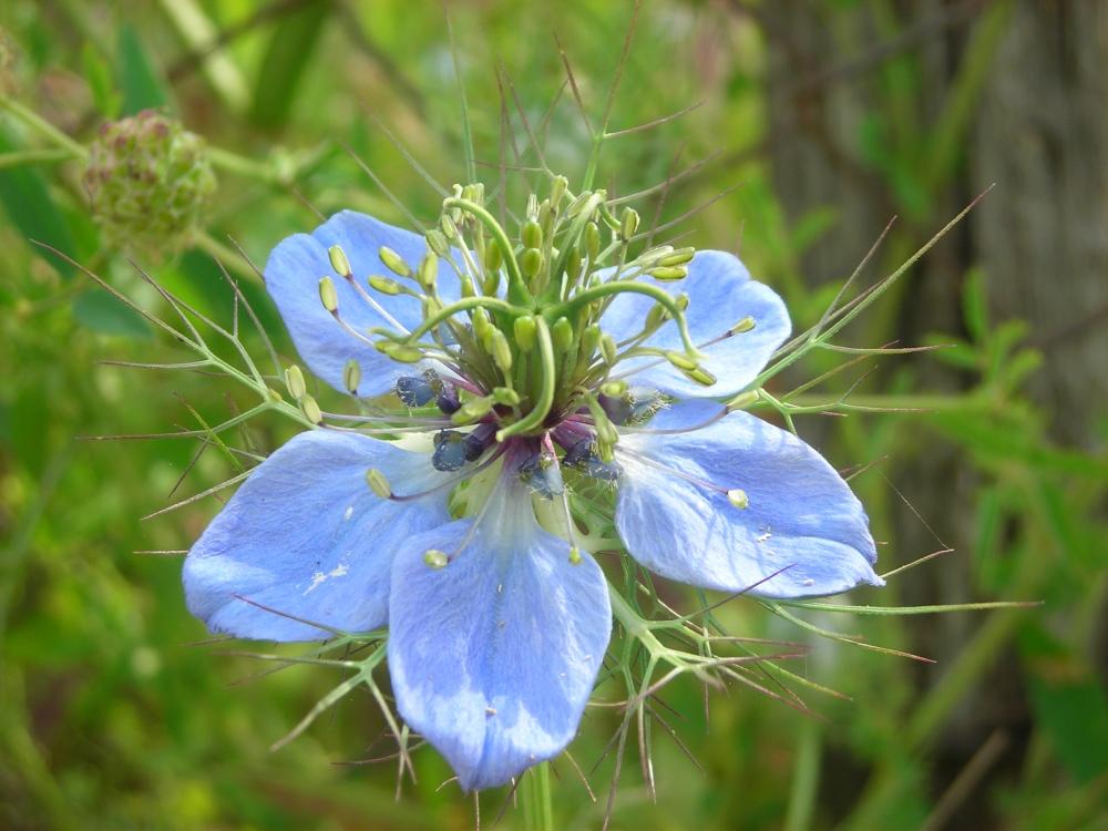 """fiore azzurro........ovvero """"Scilla"""""""