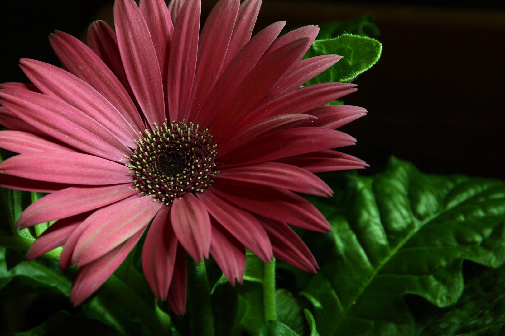 fiore bello