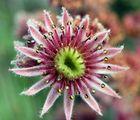 Fiore 'carnivoro' - 19 Agosto 2005