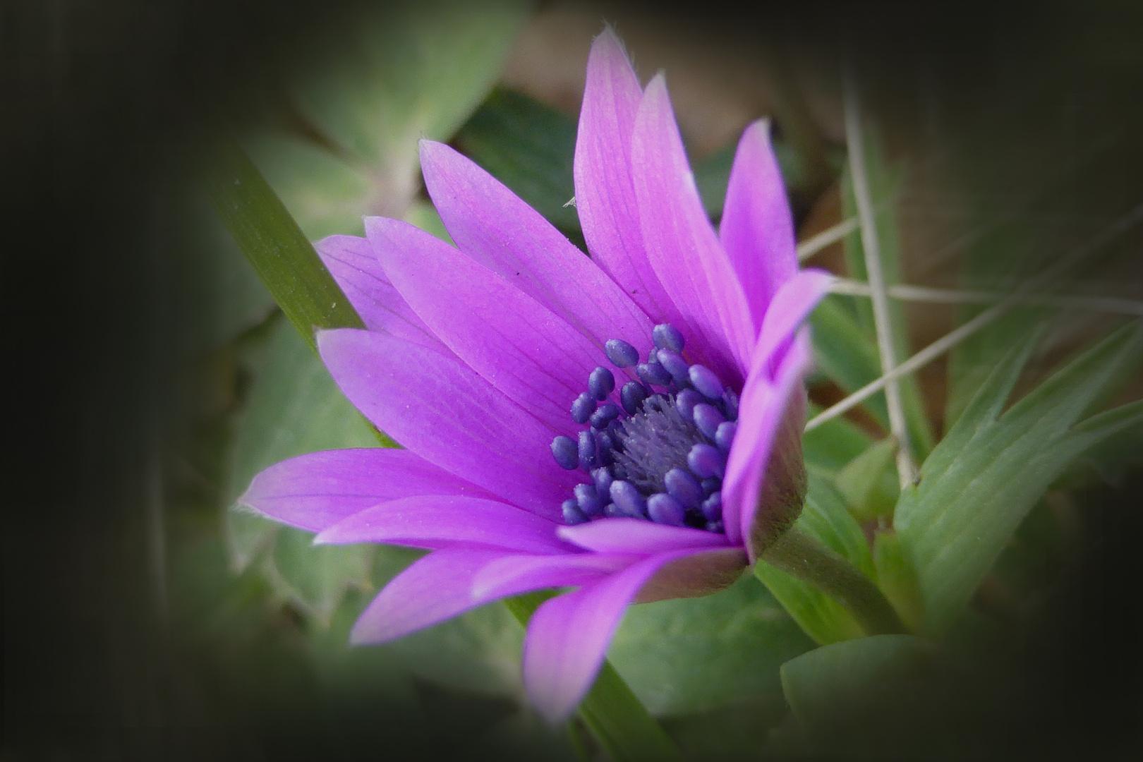 ...fiore di campo...