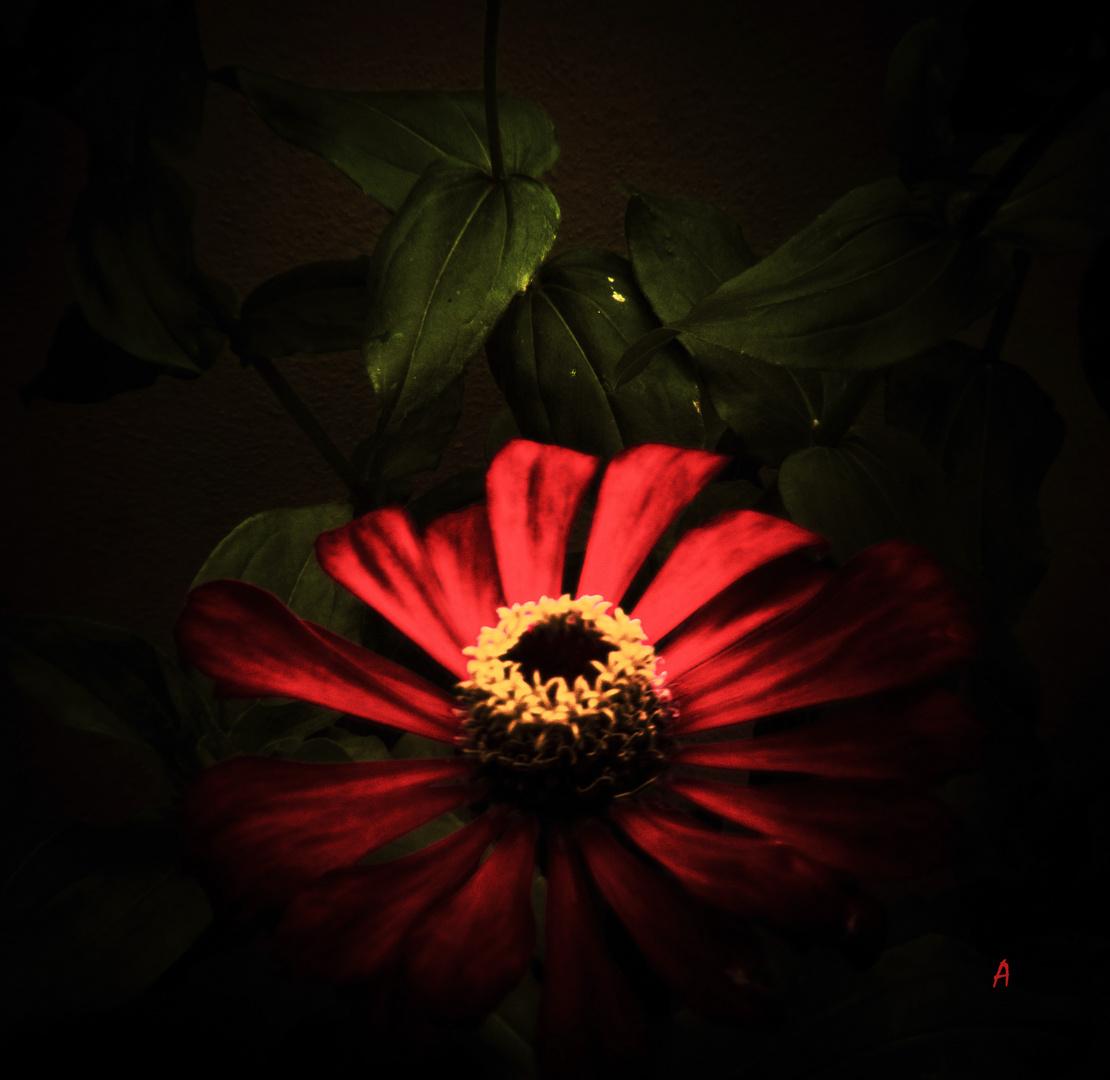 fiore di dentro