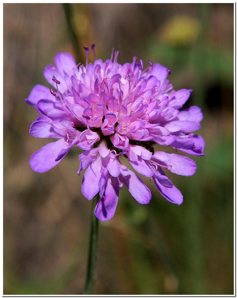 Fiore di Montagna!