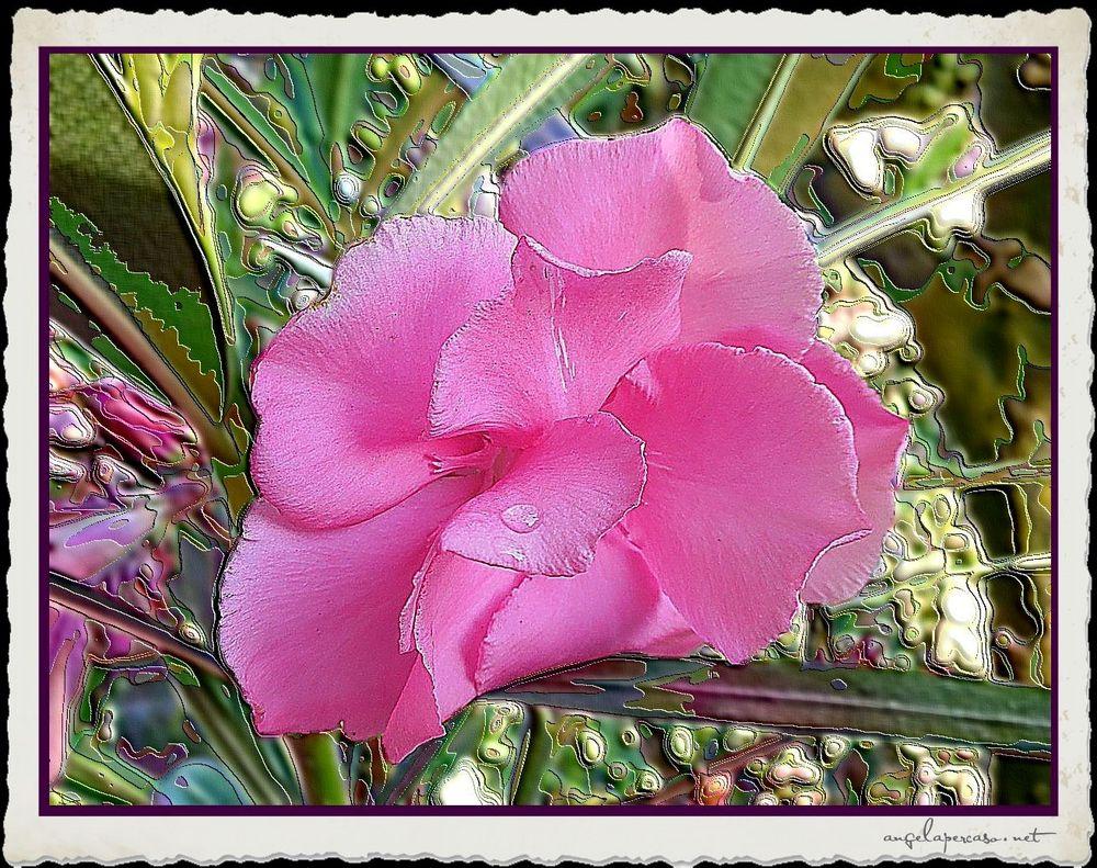 fiore di oleandro