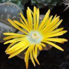 Fiore di pietra