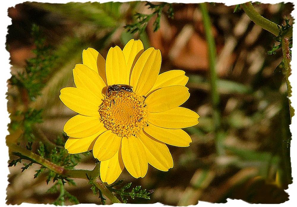 Fiore giallo con compagnia.