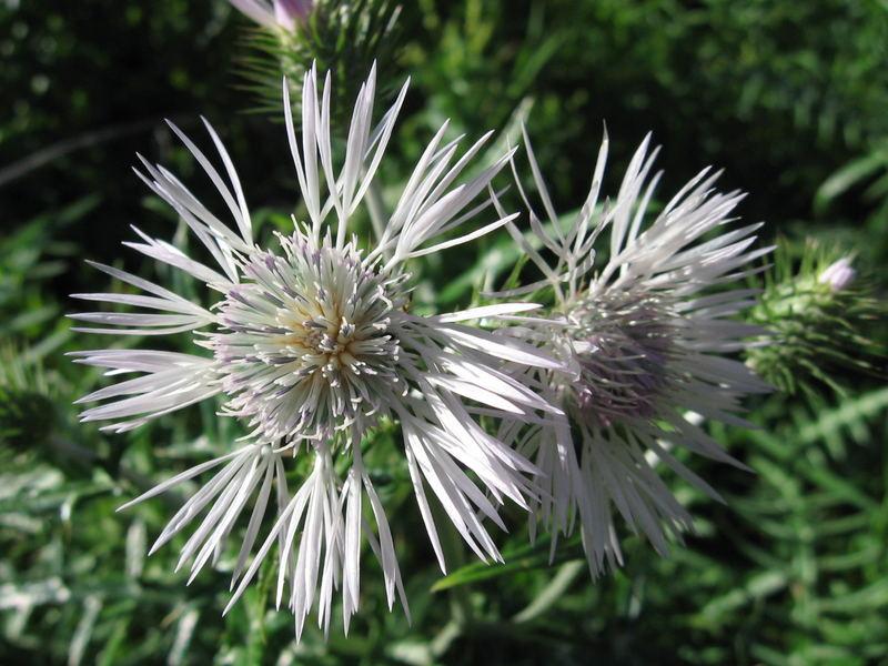 fiore invernale