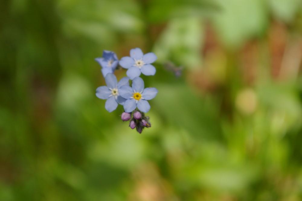fiore sai.. non ti raccolgo voglio farti vivere...