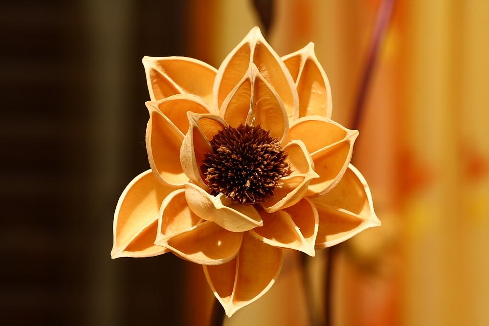 Fiore secco