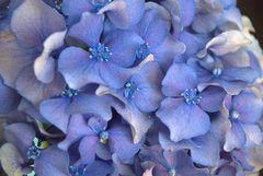 Fiore......come un piccolo pensiero .....del mattino