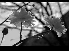 fiorellini nel tramonto.......