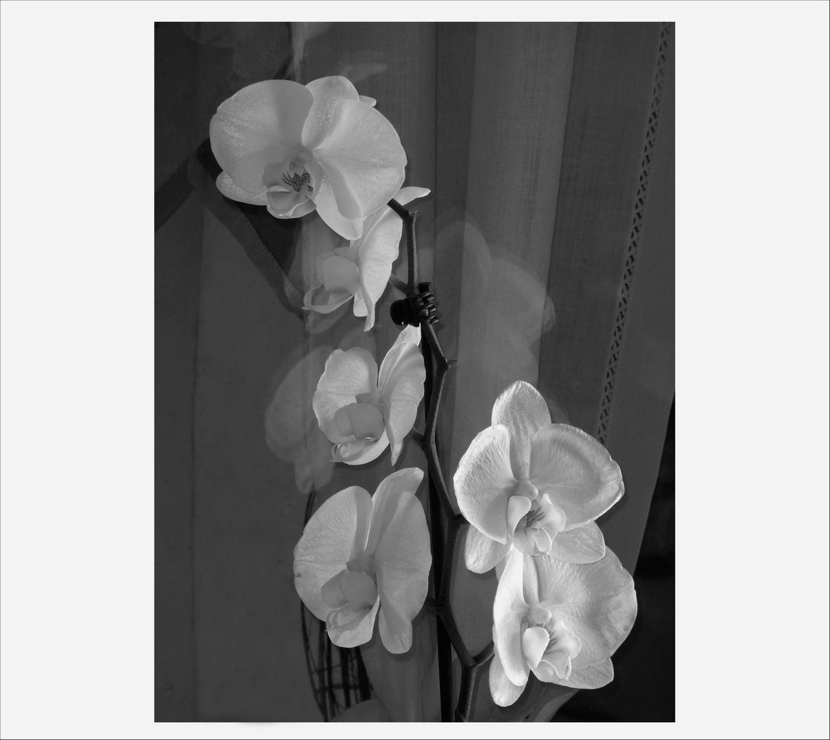 fiori...