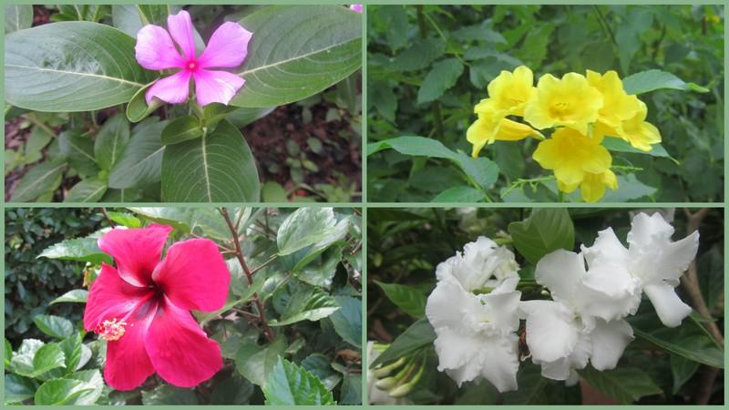 """fiori """"burkinabè"""""""