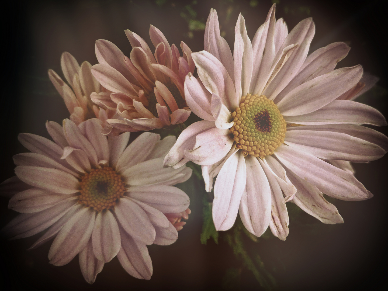 ...fiori .....
