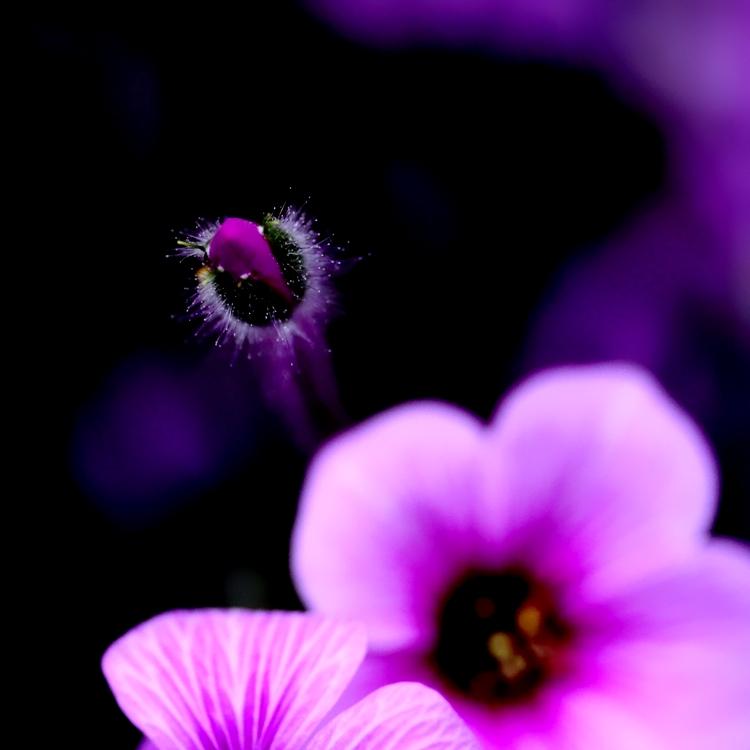 fiori colori *7*