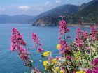 fiori delle Cinque Terre