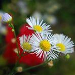 .....fiori di campo in terrazza.....