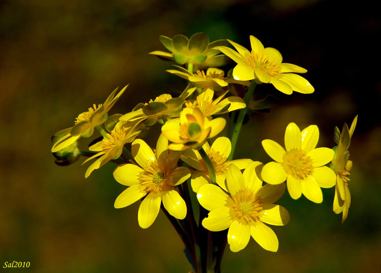 fiori di campo1