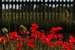 fiori di ferrovia