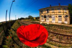 fiori di ferrovia (3)